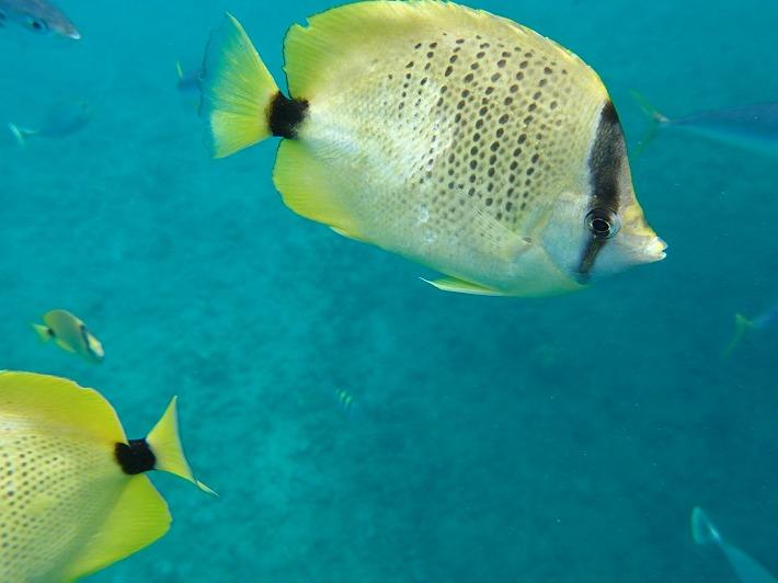 魚多すぎ!?水族館で泳いでいるような錯覚に陥れる大自然を満喫!