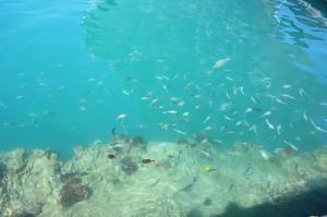 知ってた?こんなところに無料天然水族館!知る人ぞ知る魚のたまり場